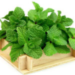 Mint Leaves (Pudina) | The 5 Most Common Reasons To Use For Health Benefits